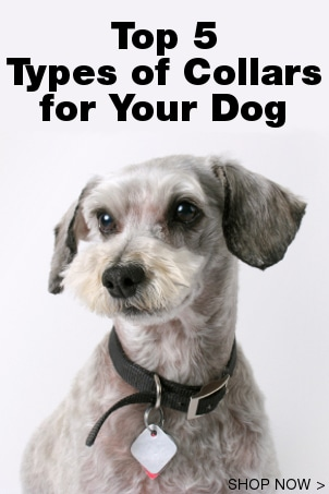 Top 5 Types of Collars for Your Dog