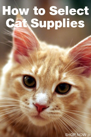 How to Select Cat Supplies