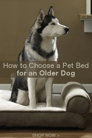 How to Choose a Pet Bed for an Older Dog