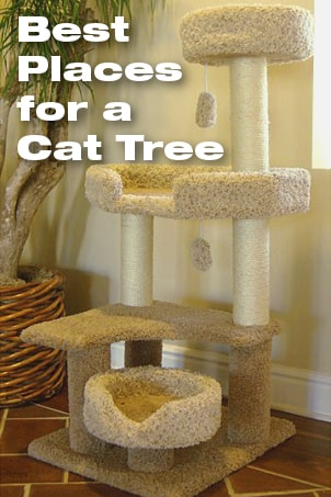 Best Places for a Cat Tree