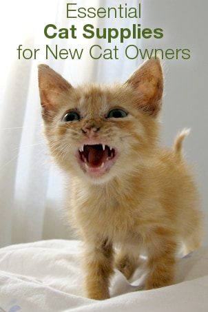 Essential Cat Supplies for New Cat Owners