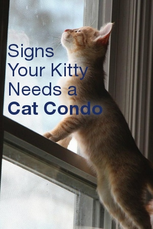 Signs Your Kitty Needs a Cat Condo