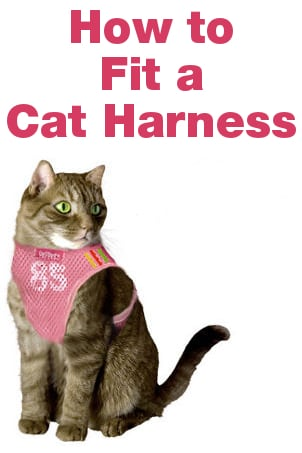 How to Fit a Cat Harness