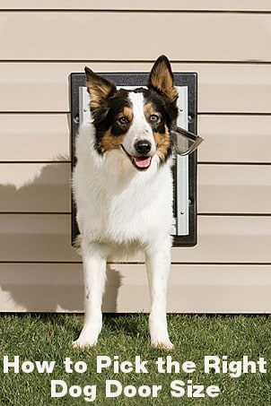 How to Pick the Right Dog Door Size