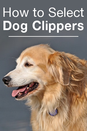 How to Select Dog Clippers